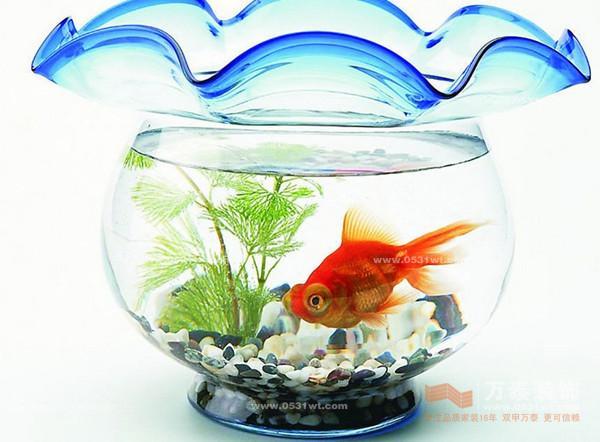 鱼缸加水的正确方法图解